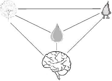 Рис. 3. Образование интенсивной связи между элементами в живой системе.