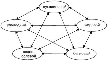 Метамодель пентаграммы для обмена веществ человека